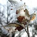 Wisps In The Wind by Valerie Fuqua