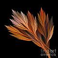 Wispy Tones Of Autumn by Kaye Menner