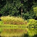 Wispy Wild Grass Reflections by Maria Urso