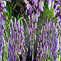 Wisteria Abstract by Jeff McJunkin