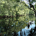 Withlacoochee River Reflections by Norman Johnson