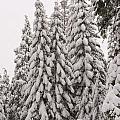 Wnter Snow At Shaver Lake by Doug Holck