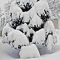 Wnter Tree 5 by William Norton