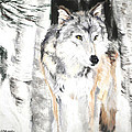 Wolf In Snow by Sandy Brooks