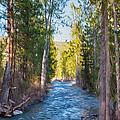 Wolf Creek Flowing Downstream  by Omaste Witkowski