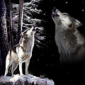 Wolf  Howling Memory by Regina Femrite