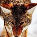 Wolf In The Wild by Florian Rodarte