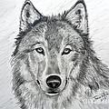 Wolf by Julie Brugh Riffey