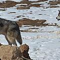 Wolf Pair by Paulina Roybal