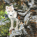 Wolf Pup by Sandy Brooks