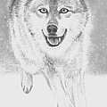 Wolf by Raine Cook