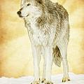 Wolf Shine by Steve McKinzie