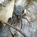 Wolf Spider And Spiderlings by Mother Nature