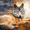 Wolf - Spirit Of Truth by Carol Cavalaris