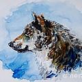 Wolf by Zaira Dzhaubaeva