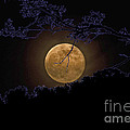 Wolfbane Moon by Paul Mashburn