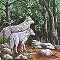 Wolves In South Dakota by Sharon Molinaro