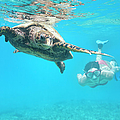 Woman Diving With A Hawksbill Sea by 4fr