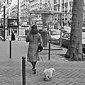 Woman In Paris Walking Dog by Matthew Bamberg