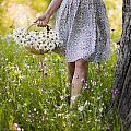 Woman Picking Flowers In A Wild Flower Meadow by Lee Avison