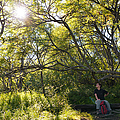 Woman Sitting On Bench - Bright Green Trees Sun Is Shining by Matthias Hauser