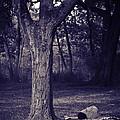 Woman Under A Tree by Madeline Ellis