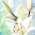 Wonderful Lilies by Lali Kacharava