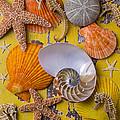 Wonderful Sea Life by Garry Gay