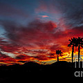 Wonderful  Sunrise by Robert Bales