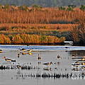 Wonderful Wetlands by Al Powell Photography USA