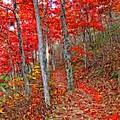 Wonders Of Autumn  by Lynn Bauer