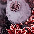Wonderworld Of Flowers by Steve K