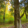 Wondrous Tree by Michael DArienzo