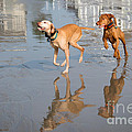 Woo Hoo - It's A Beach Day by Mary Koenig Godfrey