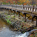 Wood Bridge And Autumn Color by Panoramic Images