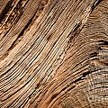 Wood by Delphimages Photo Creations