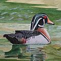 Wood Duck by Jill Ciccone Pike