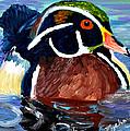 Wood Duck by Michael Lee