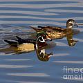 Wood Ducks by Anthony Mercieca