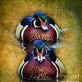Wood Ducks by Steve McKinzie