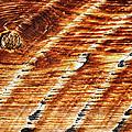 #woodgrain by Becky Furgason