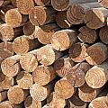 Wood Logs by Gunter Nezhoda