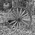 Wood Spoke Wheel by Sherman Perry
