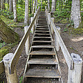 Wood Staircase In Hiking Trail by Jit Lim