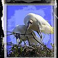 Wood Storks by Joseph Harper