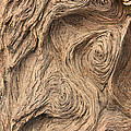 Wood Swirls by Nicole Doering