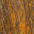 Wood Texture 3 by Ashley M Conger