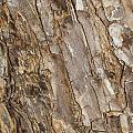 Wood Textures 4 by Ashley M Conger