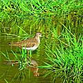 Solitary Sandpiper by MTBobbins Photography