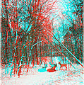 Wooded Path - Use Red And Cyan Filtered 3d Glasses by Brian Wallace